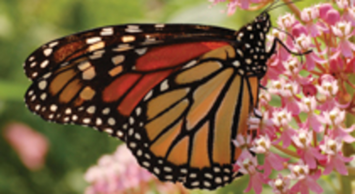 pacific grove chamber of commerce monarch butterflies top
