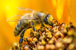 Science Saturday - Bees, Wasps, Honey, & Hives