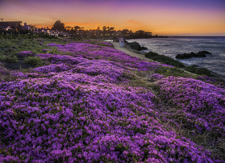 Pacific Grove Photo of the Week May 15-19