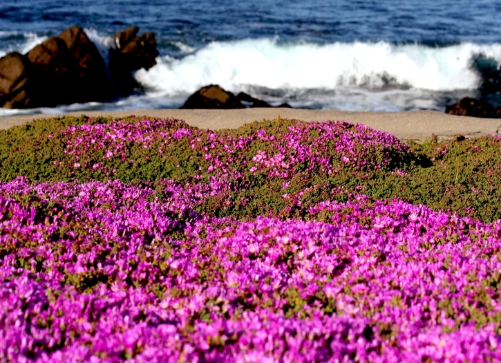 Pacific Grove Photo of the Week May 22-26