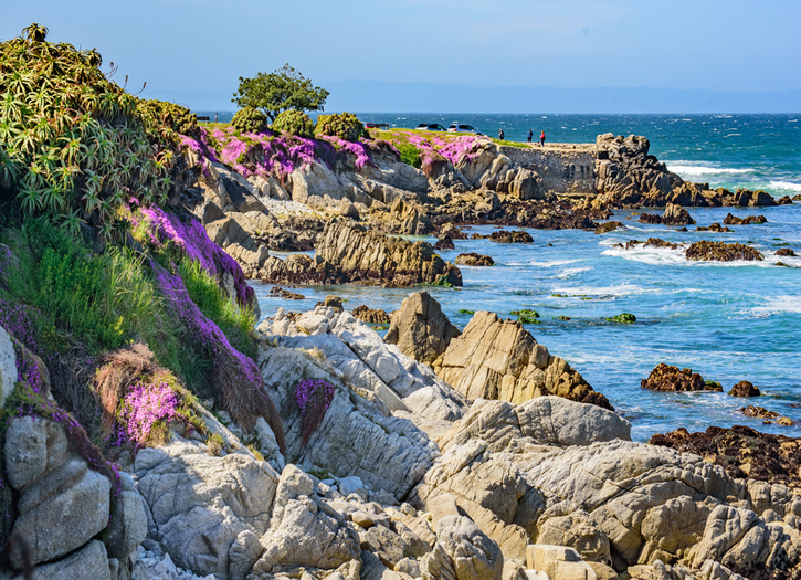 Pacific Grove Blooms: The Return of the Magic Carpet