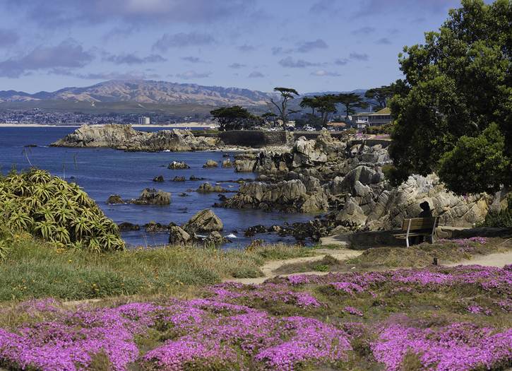 Pacific Grove Photo of the Week Jun 12-16