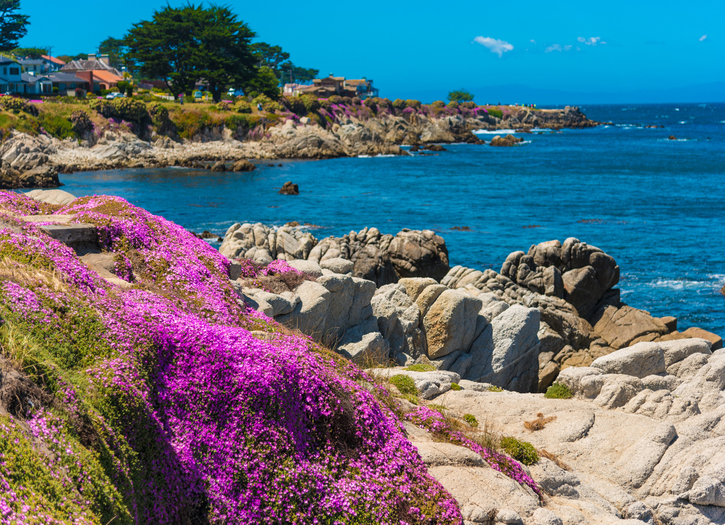 Pacific Grove Photo of the Week May 30-June 2
